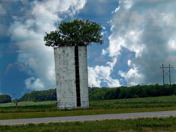 TREE IN SILO (2)WM